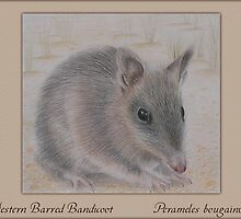 Western Barred Bandicoot by Kristen Joy Tunney