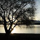 Silhouette by Kathryn Steel