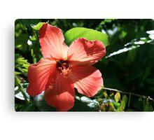 Hibiscus Peach Canvas Print