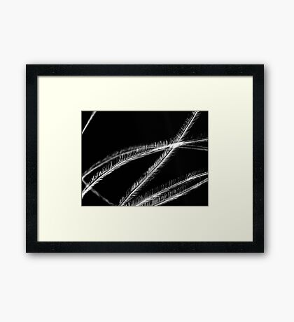 Stroke Me Framed Print