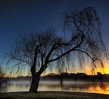 Winter willow 2 by DaveBassett
