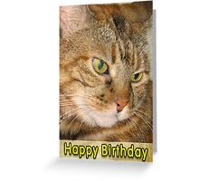 Cat Happy Birthday Greeting Card