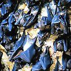 Bats  by sparrowdk