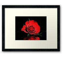 Christmas Rose Framed Print