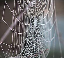 Charlotte's Web by RadicalRach