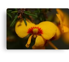 Macro Yellow Flower Canvas Print