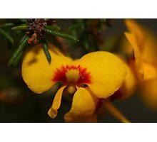Macro Yellow Flower Photographic Print