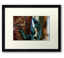 Lizard Scales- Phu Kradeung National Park, Thailand Framed Print