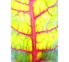 Rainbow leaf (I) Photographic Print