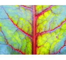 Rainbow leaf (II) Photographic Print
