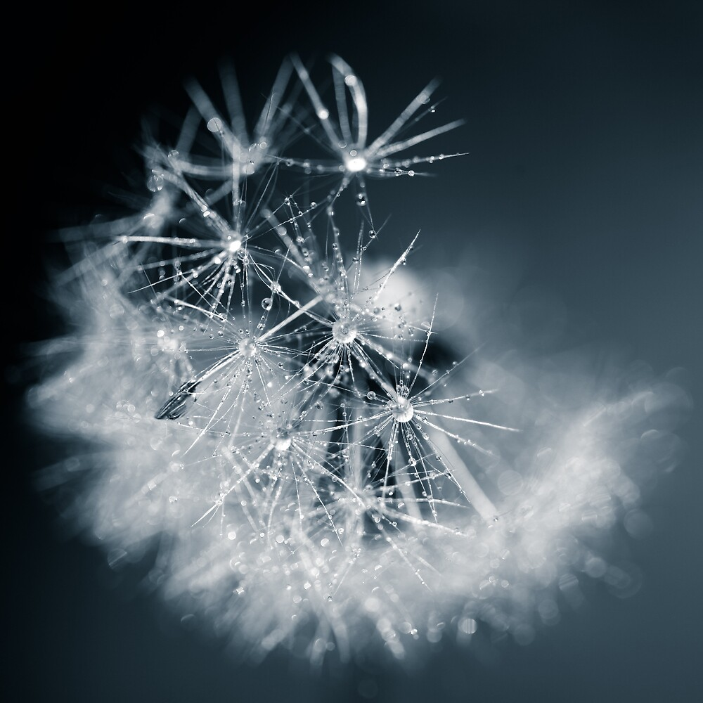 snowflake by Nika Seliverstova