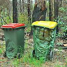Bushfire Bins by Penny Smith