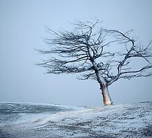 Weathered Tree - Crown Range, South Island, New Zealand by Leigh Voges