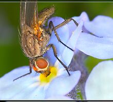 A drink of the Amber Nectar.! by crackerjack