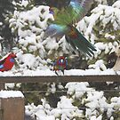 Parrots in the snow by Robyn Lakeman