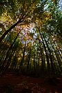 through the treetops by Andrew Jones