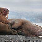 Get Off My Flipper! by Steve Bulford