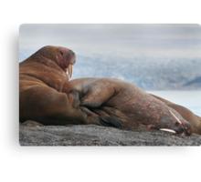 Get Off My Flipper! Canvas Print