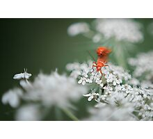 Raw Bug Love Photographic Print