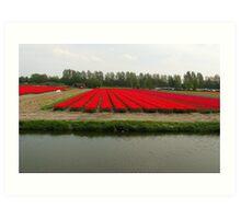 Red hot tulips field Art Print