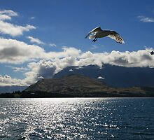 Seagulls over Queenstown by DRWilliams