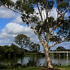 Gum tree on the banks of the Clarence River by myraj
