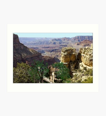 967-Cougar Canyon Vista Art Print