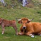 Mother and son, Picos de Europa, Spain by Andrew Jones