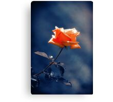 Rose Flower Canvas Print