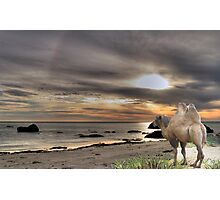 968-The Old Camel & the Sea Photographic Print