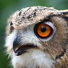 17 Week Old Turkmenian Eagle Owl by jdmphotography