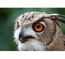 17 Week Old Turkmenian Eagle Owl Photographic Print