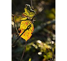 Early Morning Leaf Photographic Print