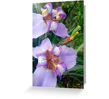 Walking Iris Greeting Card