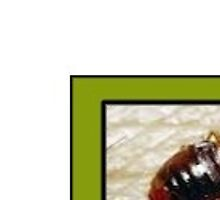 Expert Bed Bug Exterminator Brooklyn by pestcontrolny