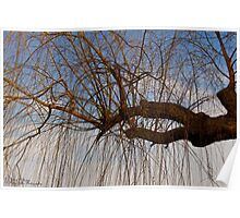 The Trees Of Beihai Park © Poster