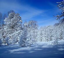 Winter Trees ^ by ctheworld