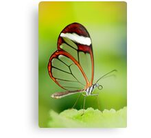 Transparent beauty Metal Print