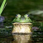 Bullfrog  by main1