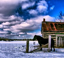 Horse and Castle by justimagine