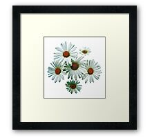 Circle of White Daisies Framed Print