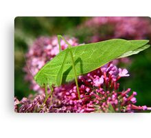 Leaf Hopper Canvas Print