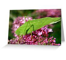 Leaf Hopper Greeting Card