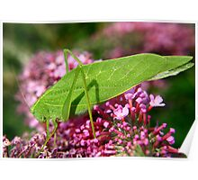 Leaf Hopper Poster