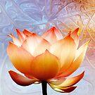Sunshine Lotus by Jacky