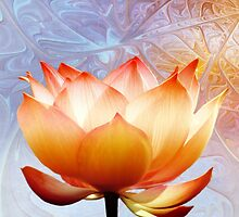Sunshine Lotus by PhotoDream Art