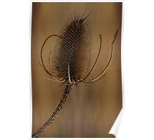 Teazle wild plant floral art Poster