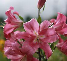 cloudy pink rain by 00Bb00