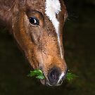 Foal and Leaves by Jane-in-Colour