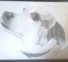 Framed Dog Drawing by Darrel Leigh